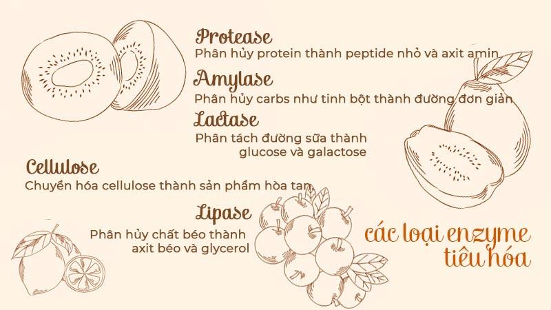 5 loại enzyme tiêu hóa