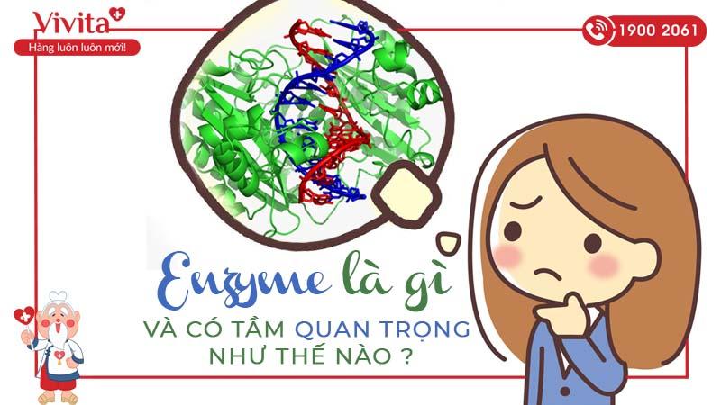 enzyme là gì và có tầm quan trọng như thế nào