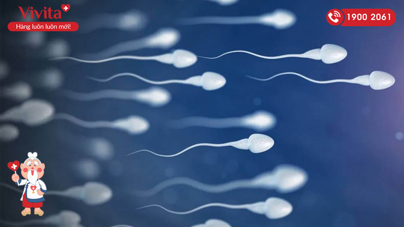 số lượng tinh trùng của nam giới