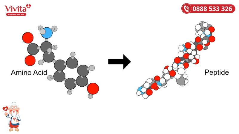 Peptide là chuỗi dài các acid amin được cơ thể sản sinh ra với tác dụng sinh tổng hợp các loại protein